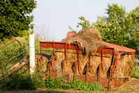 2012Aug25_SummerFarm_002
